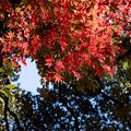 14都心紅葉名所巡り【旧古河庭園:心字池周辺の紅葉】3