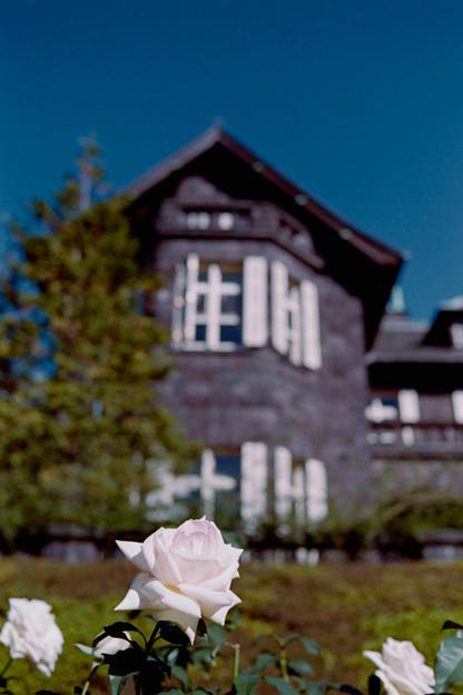 Photos: 11都心紅葉名所巡り【旧古河庭園:初恋という名のバラ】銀塩NLP