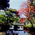 Photos: 17都心紅葉名所巡り【六義園:渡月橋とハゼの紅葉】銀塩
