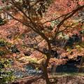 23都心紅葉名所巡り【新宿御苑:日本庭園近辺の紅葉】3