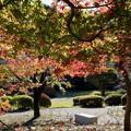 25都心紅葉名所巡り【新宿御苑:日本庭園近辺の紅葉】5