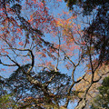 22都心紅葉名所巡り【新宿御苑:日本庭園近辺の紅葉】2