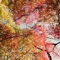 24都心紅葉名所巡り【新宿御苑:日本庭園近辺の紅葉】4銀塩NLP