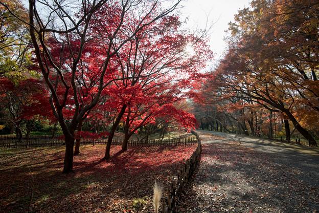 01神代植物公園【かえで園の紅葉】1