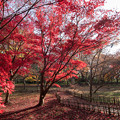02神代植物公園【かえで園の紅葉】2