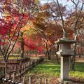 04神代植物公園【かえで園の紅葉】4