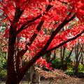 09神代植物公園【かえで園の紅葉】9