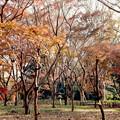 Photos: 14神代植物公園【かえで園の紅葉】5銀塩NLP