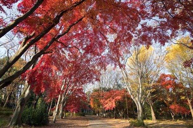 16神代植物公園【自由広場の紅葉】11