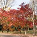 21神代植物公園【自由広場の紅葉】16