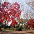 17神代植物公園【自由広場の紅葉】12