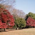 20神代植物公園【自由広場の紅葉】15