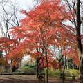 23神代植物公園【自由広場の紅葉】18