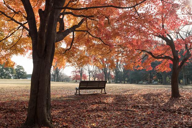 24神代植物公園【自由広場の紅葉】21