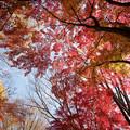 29神代植物公園【自由広場の紅葉】26