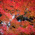 31神代植物公園【自由広場の紅葉】28
