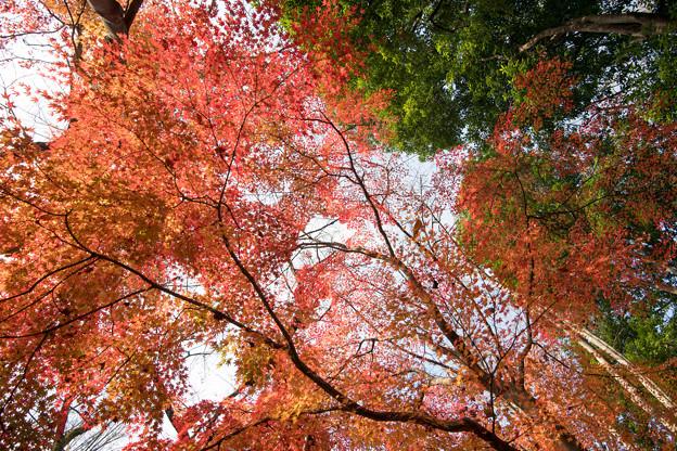 30神代植物公園【自由広場の紅葉】27