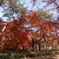 41神代植物公園【築山付近の紅葉】1