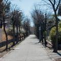 年末ウォーキング【近所の緑道】1
