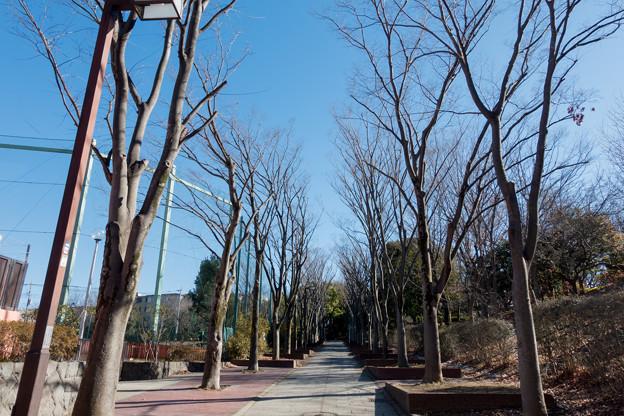 Photos: 年末ウォーキング【近所の緑道】2