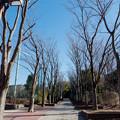 年末ウォーキング【近所の緑道】2