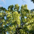 年末ウォーキング【近所の緑道:鮮やかな緑】