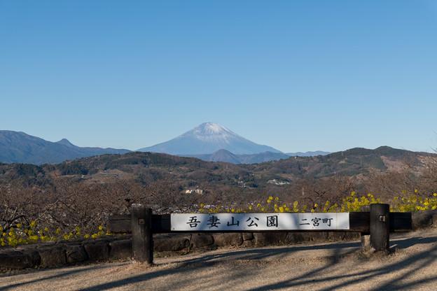 01吾妻山公園【菜の花畑】