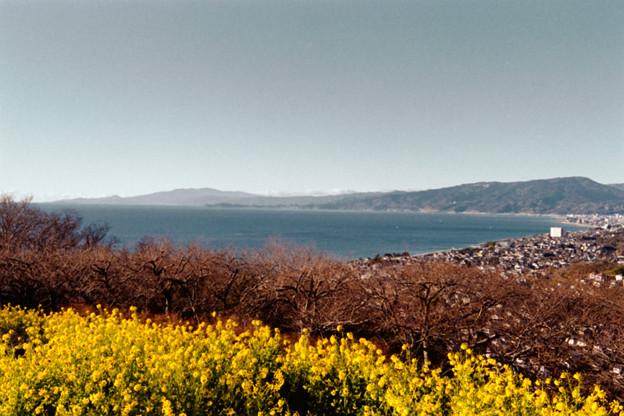 Photos: 07吾妻山公園【菜の花畑と相模湾】2銀塩NLP