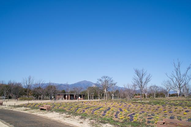 03花菜ガーデン【大山の眺め】
