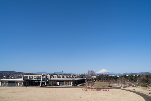 01花菜ガーデン【富士山の眺め】1