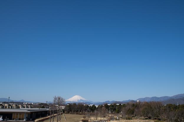 02花菜ガーデン【富士山の眺め】2