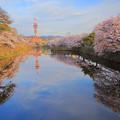 写真: ?根城外城河櫻花之美