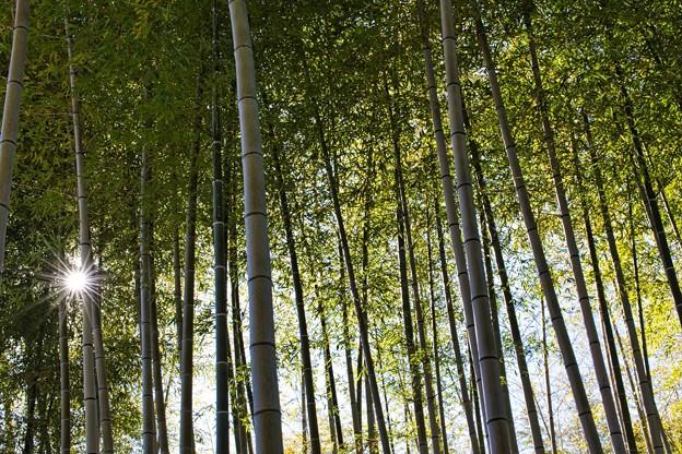 20210110 万博記念公園 竹林