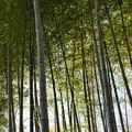 Photos: 20210110 万博記念公園 竹林