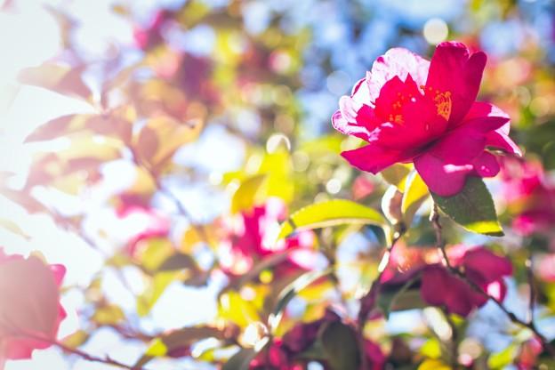 20210110 万博記念公園 花