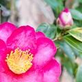 Photos: すぐ近くにある花