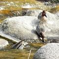 写真: 水辺の野鳥