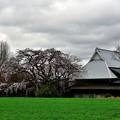 写真: 宝珠寺ヒメシタセレサクラ2