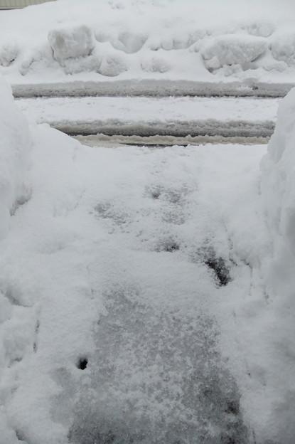 写真: 2月12日の玄関前
