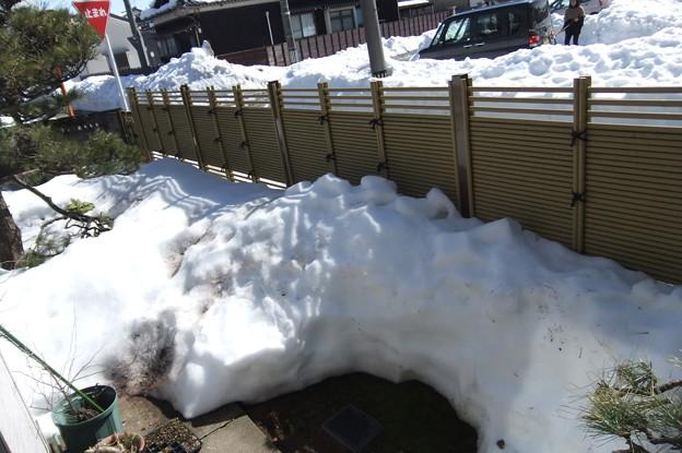 積雪半減に