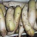 Photos: 家庭菜園の大根
