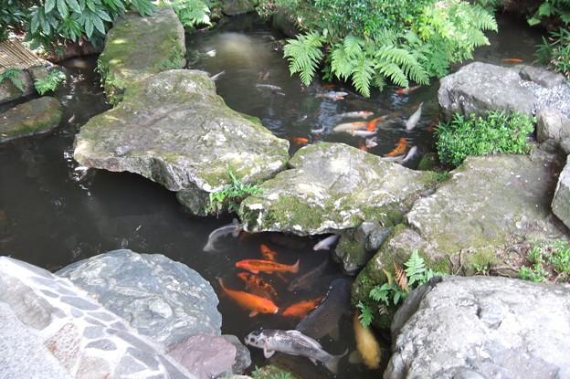 大江戸温泉物語 山下家 玄関 1