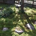 庭の苔に日が差して
