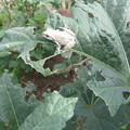 白い蛙 2