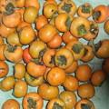 採ってきた甘柿