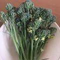 家庭菜園のブロッコリー