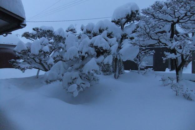 1月10日の庭 3