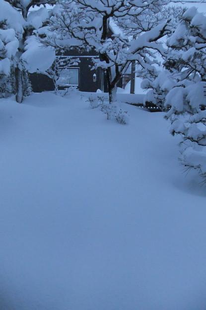 1月10日の庭 4