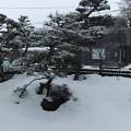 牡丹雪が降っています