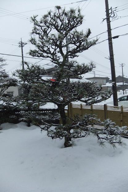 牡丹雪が降っています 気温が高いから